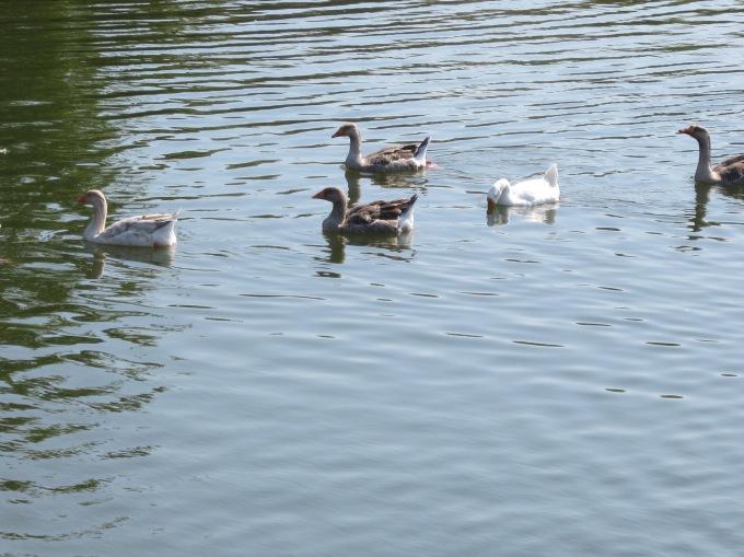Arrowhead park pics 005